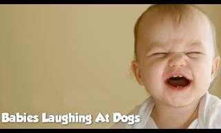 כלבים ותינוקות - סיפור אהבה
