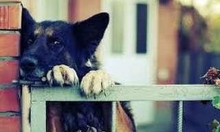 משימה בלתי אפשרית - גרסת הכלבים!