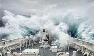 20 תמונות מדהימות מתחרות הצילום הבינלאומית של סיינה
