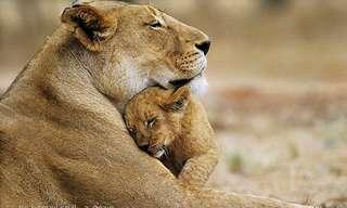 אמהות בטבע הפראי - מרגש!!