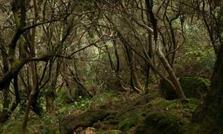 ששת הגברים שהלכו לאיבוד ביער: משל על החיים של כולנו
