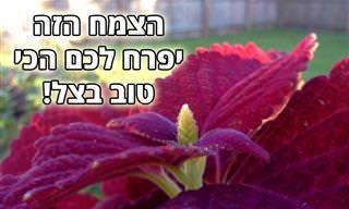 9 צמחים שאפשר לגדל בחלקים מוצלים של הגינה או בבית