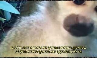 ניסוי מצחיק עם קופים בגן חיות