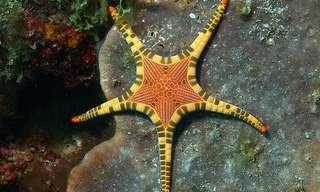 כוכבי הים הססגוניים ביותר שתראו!