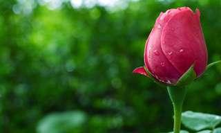 בחן את עצמך: איזה פרח מתאים לאישיות שלכם?