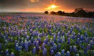 פריחת האביב מסביב לעולם