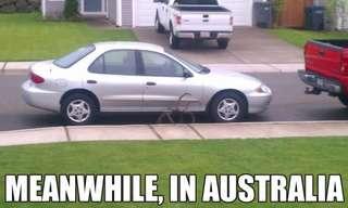 הדברים המצחיקים שקורים רק באוסטרליה