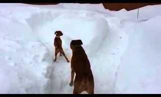 סרטון מרדף כלבים מצחיק בשלג