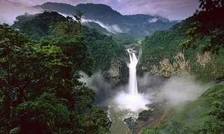 הג'ונגל האינסופי של דרום אמריקה