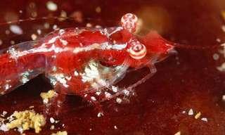 19 חיות שהמדע גילה בשנת 2014
