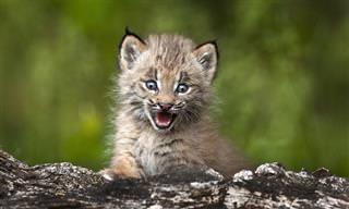הגורים החמודים של 10 מהטורפים המפחידים ביותר