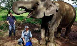 הקפה היקר בעולם עשוי מקקי של פילים