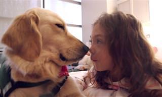הכירו את אלסה, כלבה טיפולית שמפיצה אהבה בבית חולים לילדים