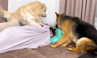 כששני הכלבים החמודים האלה בשטח אי אפשר לישון!