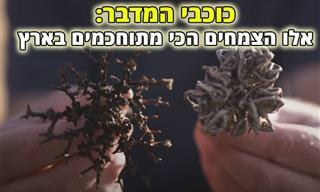 יותר מסתם קוצים: גלו את סודות הפלא של צמחי המדבר בישראל