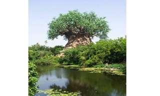 עץ מפוסל שחרוטים עליו דמויות שונות - מדהים!!
