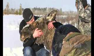 רגעים מרגשים של הצלת בעלי חיים