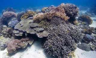 החיים היפים שבאוקיינוס - מדהים!
