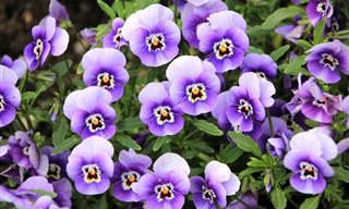 אוסף אינטראקטיבי של תמונות וסרטונים של פרחים נפלאים