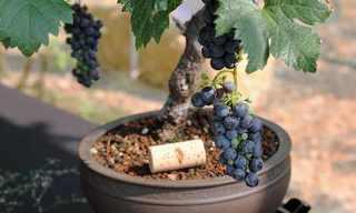 גידול ירקות ופירות בין כתלי הבית