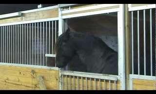 סוסה חכמה פורצת מנעולים!