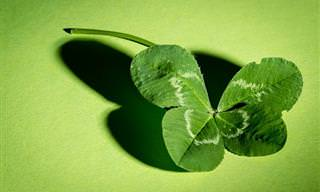 7 טיפים שיעזרו לכם להיות בני מזל בחיים