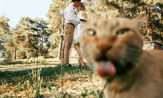 """18 תמונות חתונה ש""""נהרסו"""" באופן מצחיק ביותר"""