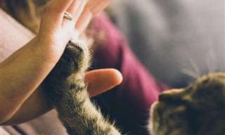 מחקר חדש חושף פרט מפתיע על הקשר בין אדם לחתול