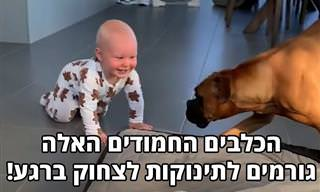 בשביל התינוקות שבסרטון הזה אין דבר יותר מצחיק בעולם מכלבים