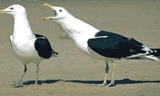 איך לזהות את מין הציפורים - קורע!