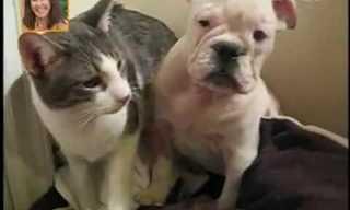 על כלבים וחתולים - לקט מצחיק!