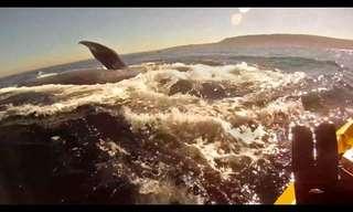 מפגש מדהים עם לווייתן בטבע!