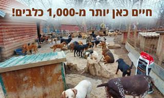 מקלט ליותר מ-1,000 כלבים בסרביה שפעיל למעלה מ-20 שנה