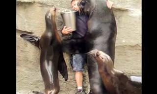 צפו בבעלי חיים שמראים את הכרת התודה שלהם לאדם שהציל אותם