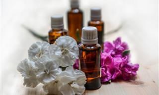 12 שימושים ויתרונות נהדרים של שמן אקליפטוס