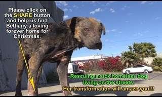 חילוץ מרגש של כלבת רחוב חולה