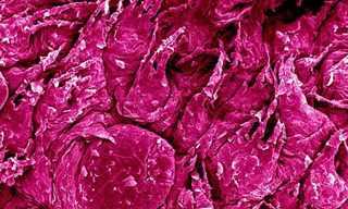תמונות מיקרוסקופיות מדהימות!