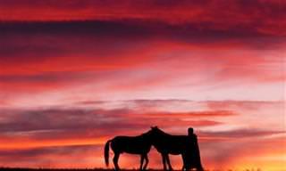 18 תמונות מרתקות שיגלו לכם את יופיה של מונגוליה