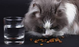 תפריט מומלץ לכלבים וחתולים שחולים בסרטן