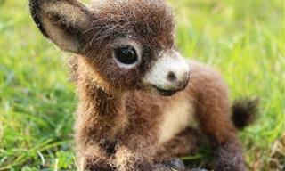 15 תמונות של בובות של בעלי חיים שנראות אמיתיות