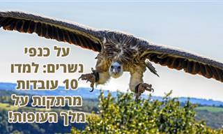 """10 עובדות מרתקות על """"מלך העופות"""" - הנשר"""