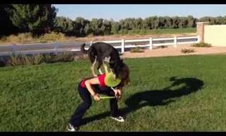 כלבים מבצעים פעלולי פריזבי מדהימים!