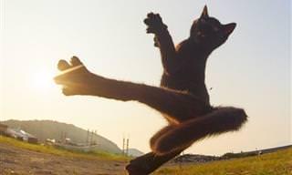 18 תמונות של חתולים עוסקים באמנויות לחימה