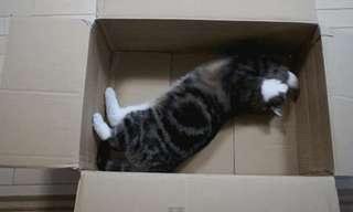 חתולים בקופסאות - 20 שיעורים לחיים!