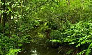 הפארק הלאומי אקדיה - טבע מדהים!