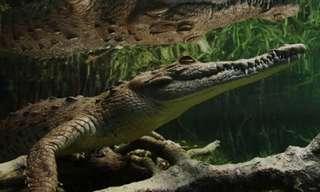 גני המלכה - אוצר טבע קסום בקובה