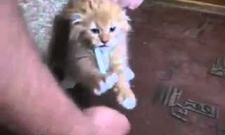 החתול שלא מוותר על הסיגריה שלו -מצחיק!