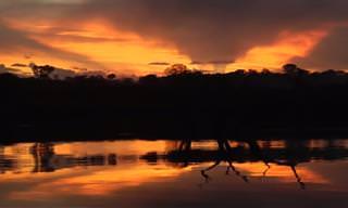 טיול מודרך מרתק אל לב האמזונאס