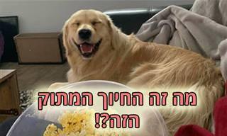 כלבים שמחים וחייכנים שימיסו את לבכם
