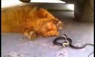 חתול ונחש עושים צחוק מהעבודה...